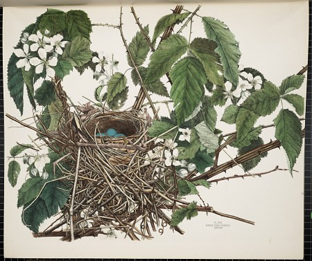 Smithsonian, America's Other Audubon