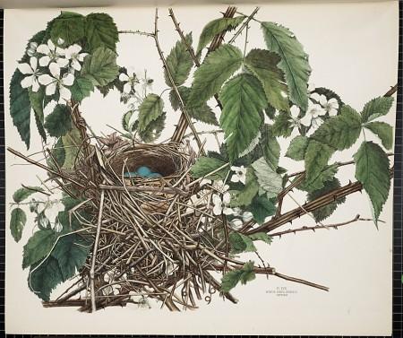 Smithsonian, America's Other Audubon