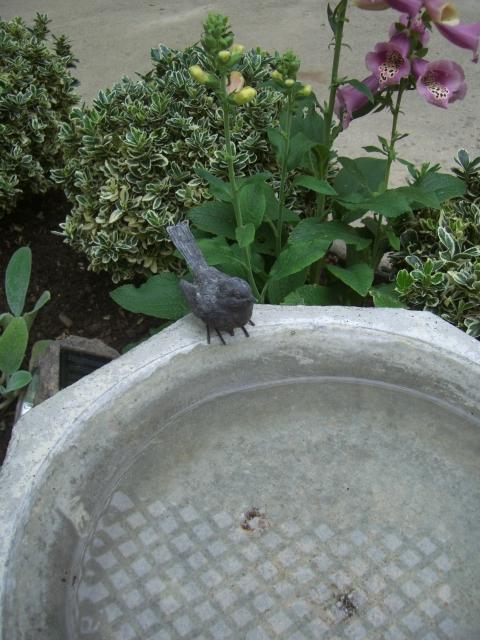 4-Bird on bath on side