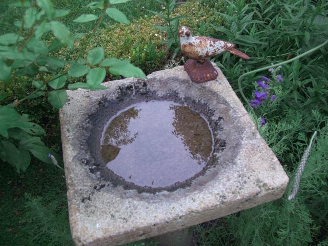 7-bird on birdbath