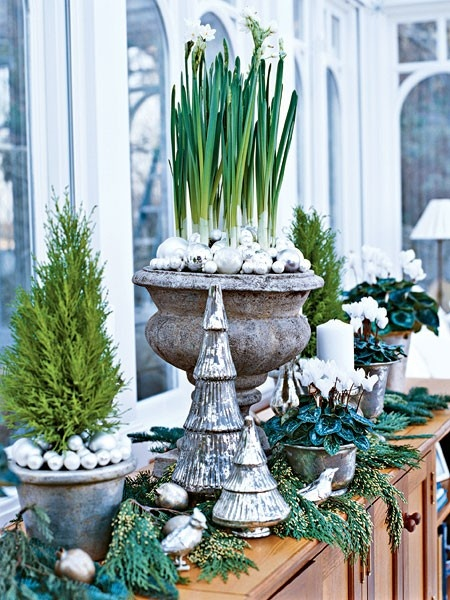 Garden Home Party has the most to die for Holiday flower and plant ideas!  I love their blog.