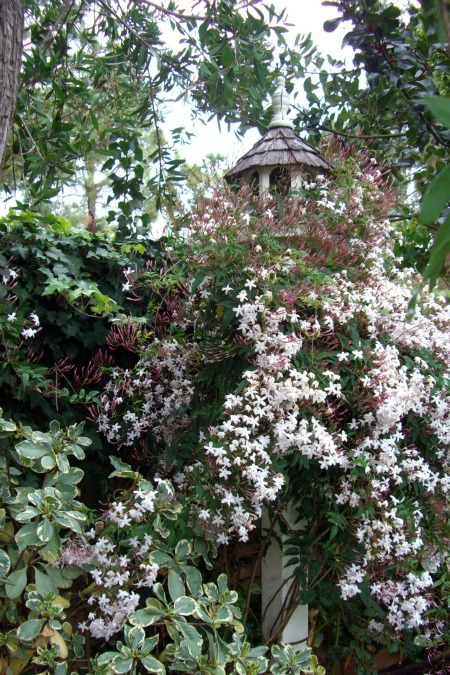 6-pink jasmine birdhouse1