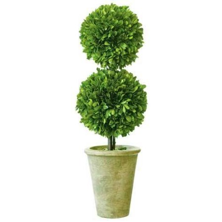amazon preserved boxwood topiary