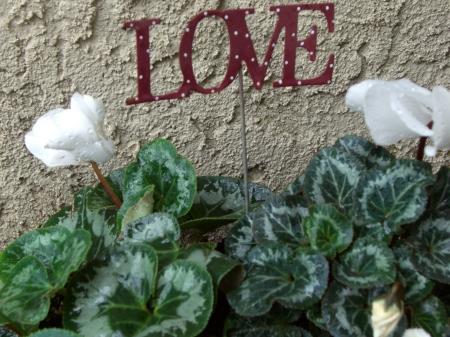 Love, Valentines