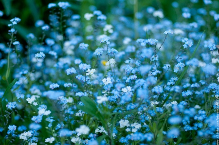 tumblrforget me nots fresh as a daisy