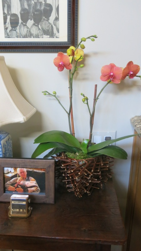 orchid, spring linky party