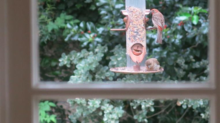 backyard birding-Garden, Home and Party