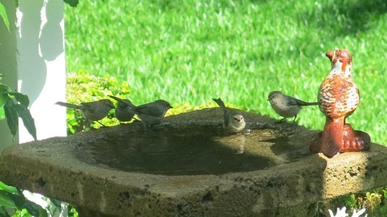 backyard birding, Garden, Home and Party