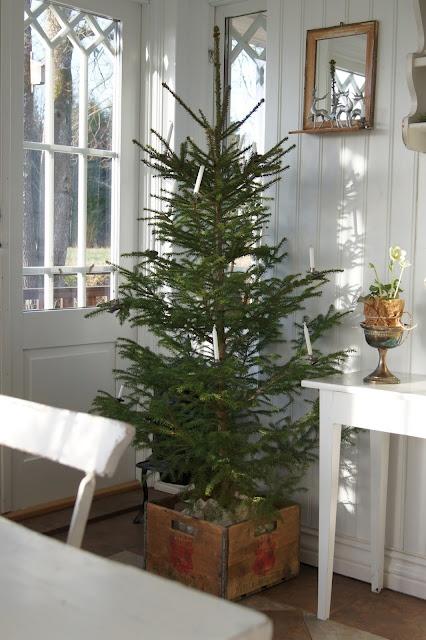 Garden, Home and Party: O Tannenbaum