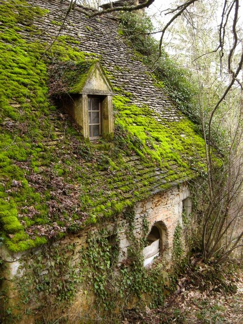Garden, Home and Party: Recipe for growing moss