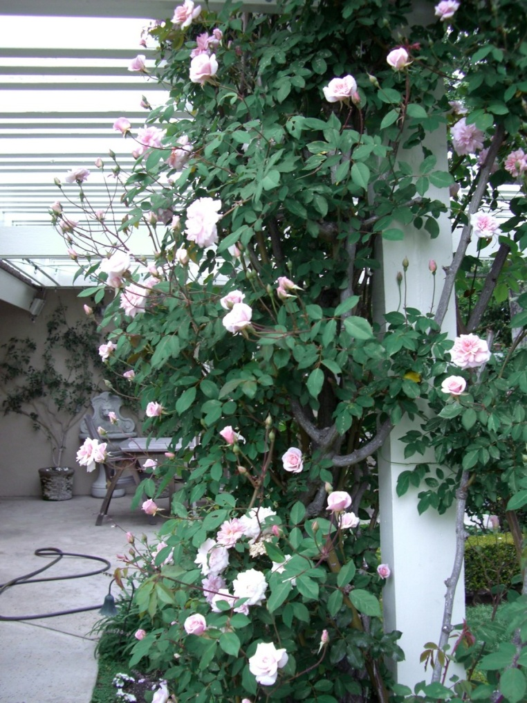 Garden Home and Party: Spring Roses