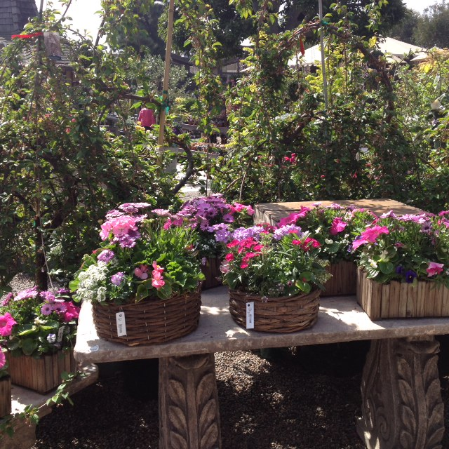 Garden, Home and Party: Celebrating Spring w Roger's Gardens