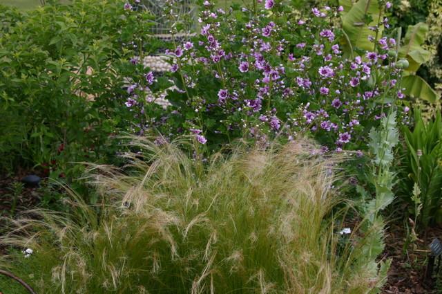 Garden, Home and Party: Gardening through a draught