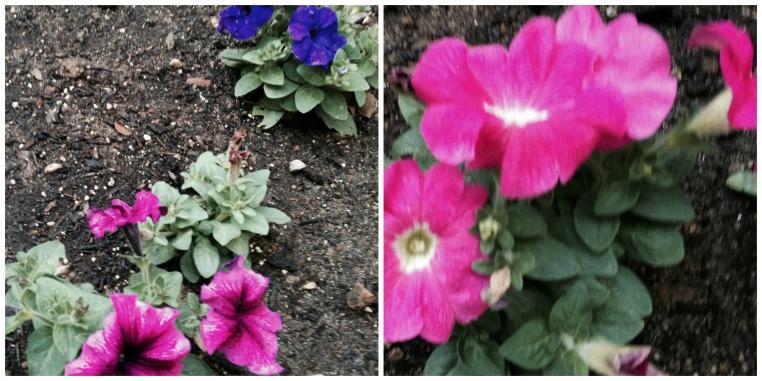 Garden, Home and Party: Gardening through a drought