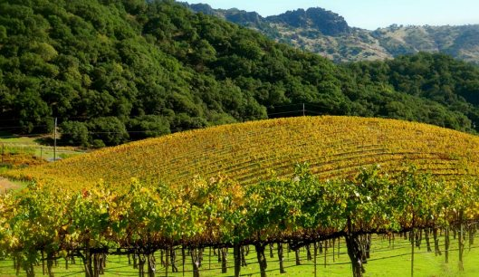 Garden, Home and Party: Wine month CA