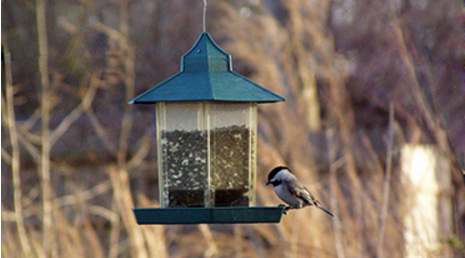 Garden, Home and Party: Bird feeder